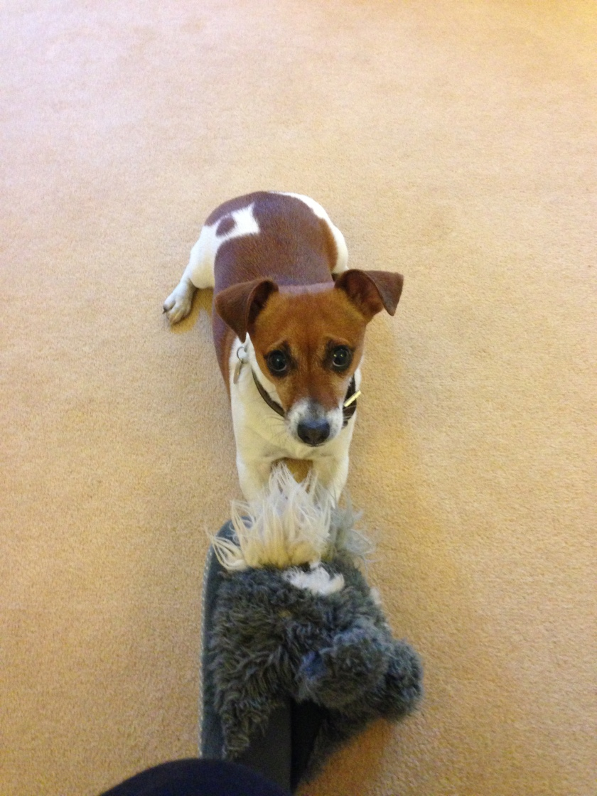 Jess and Tara's Jack Russell called Mouse (how cute is that?!)