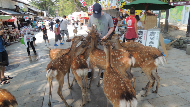 These deer get really, and I mean REALLY aggressive once they sniff food on you. Basically four-legged piranhas