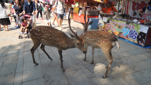 It's Prongs!!! What's he doing in Japan
